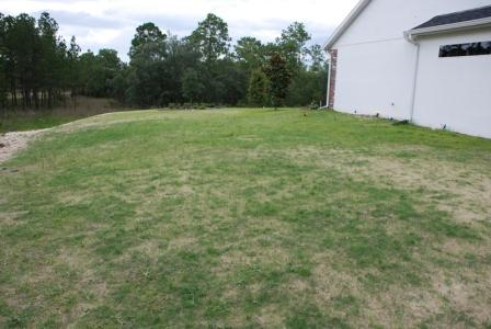 zenith_zoysia_back_yard_-three_weeks_after_seeding